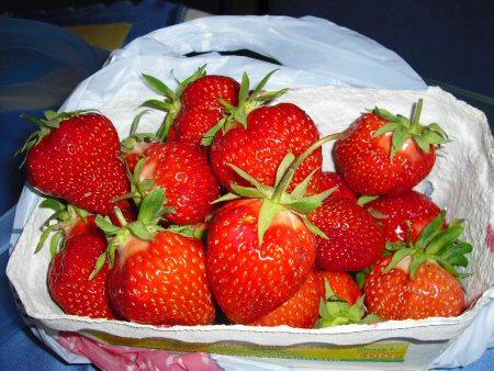 erdbeeren lambada pflanzen