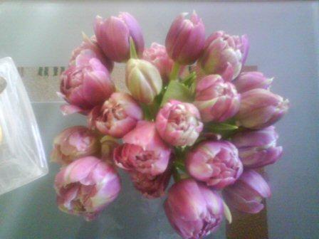fruehling_tulpen